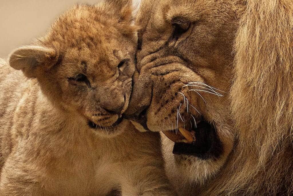 go on safari durban