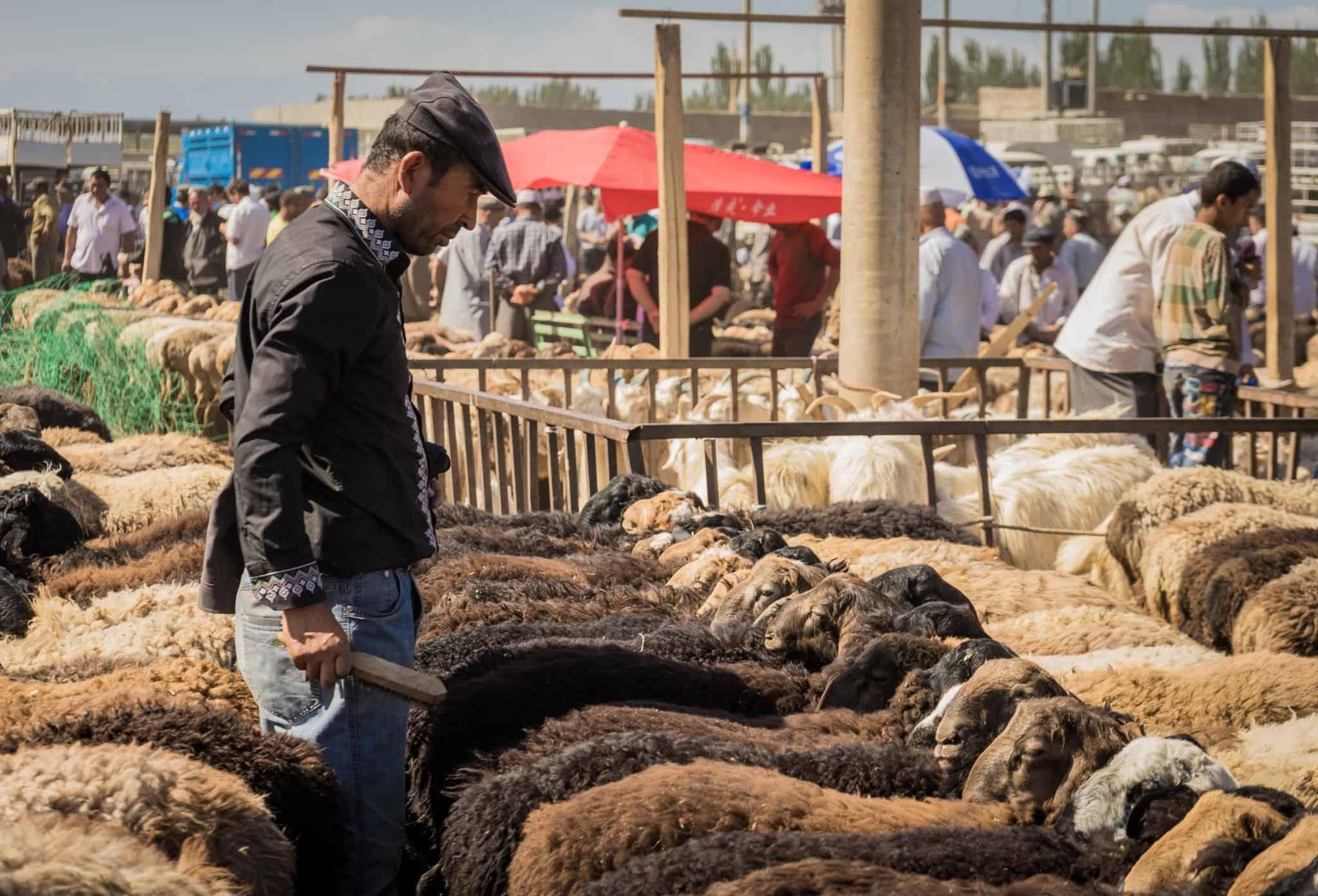 Kashgar Livestock Market Silk Road Photo Journey