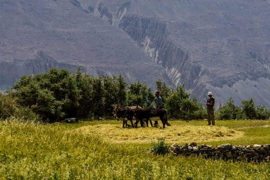 Donkeys Yamchun Pamir Highway Adventure