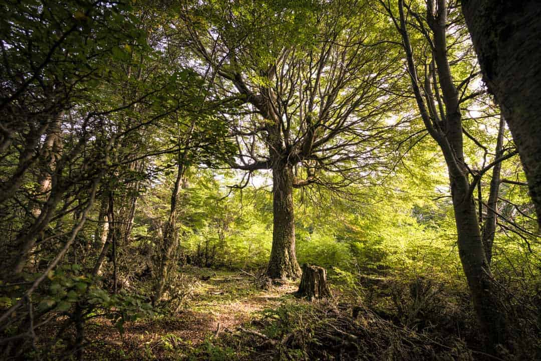 Cool Tree Ushuaia