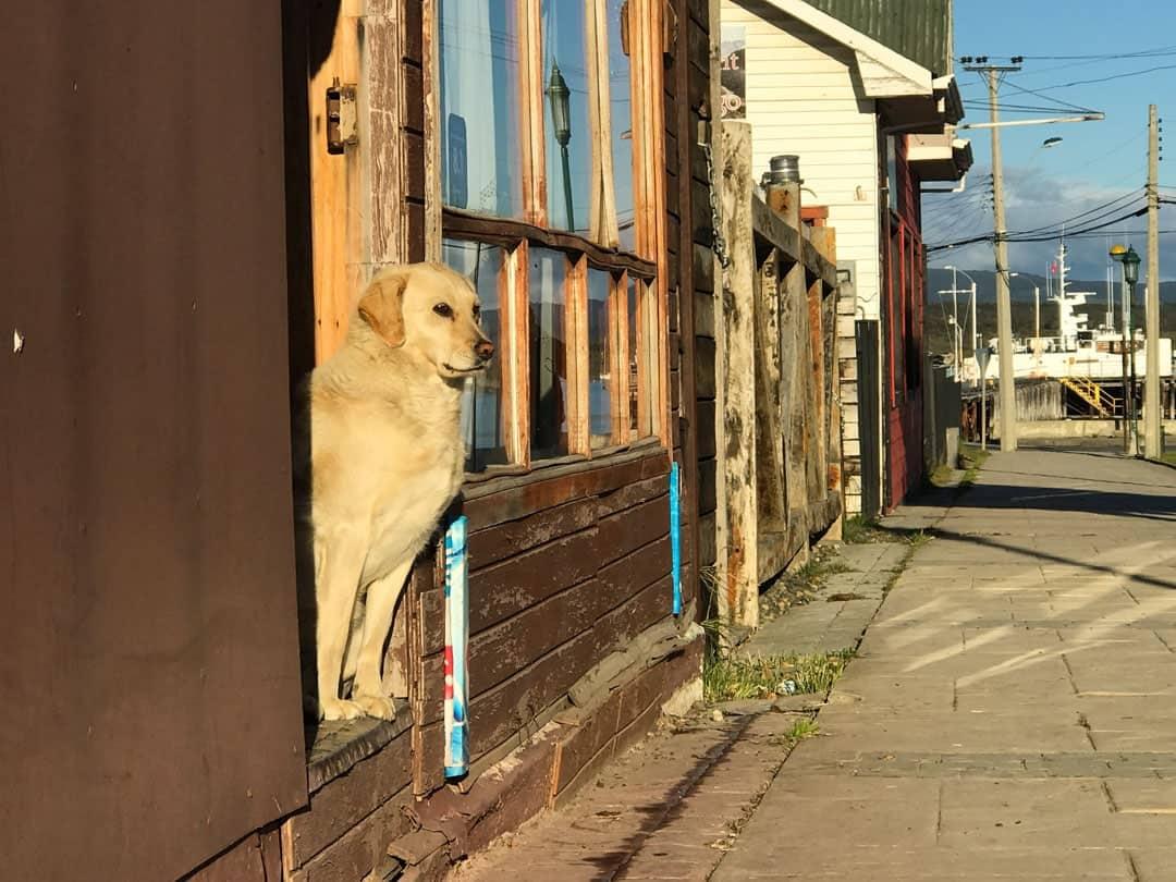 Dog Puerto Natales